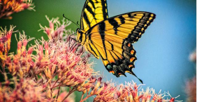 دانشمندان: حشرات در طول قرن پیش رو منقرض خواهند شد
