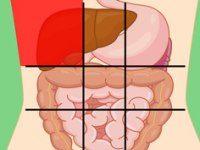 شناسایی دردهای مختلف شکم با استفاده از نقشه شکم انسان