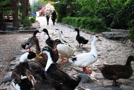 پارک جمشیدیه,پارک جمشیدیه کجاست,تصاویر زیبای پارک جمشیدیه